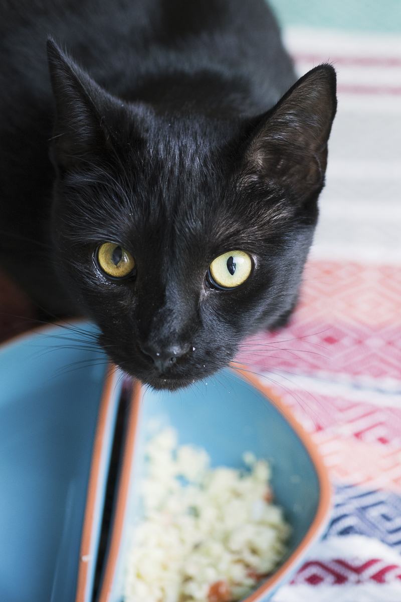 cute black cat eating his dinner, Littlehighwaykitty, ©Alice G Patterson Photography | Syracuse on location cat photographer