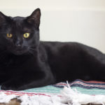 Caturday Update: Clayton, The Little Highway Kitten