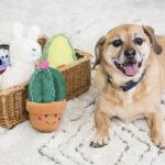 ZippyPaws Storybook Fiesta Toys Review