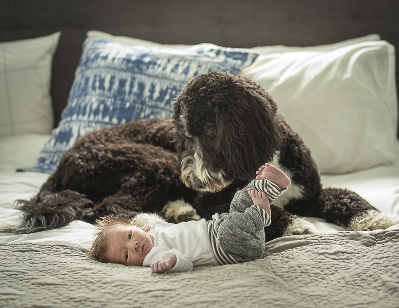 brown and white dog looking at newborn | ©Imagine It Photography, ideas for including pets in newborn sessions