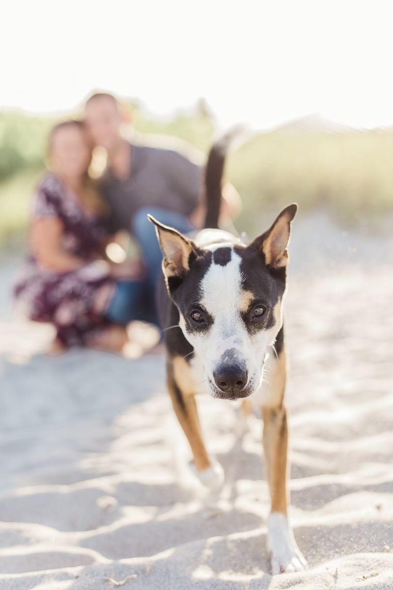 shorthaired dog running towards camera, Collie-Heeler mix, ©Liz Cowlie Photography – dog-friendly engagement session