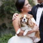 Best (Wedding) Dog:  Emma the Cavalier