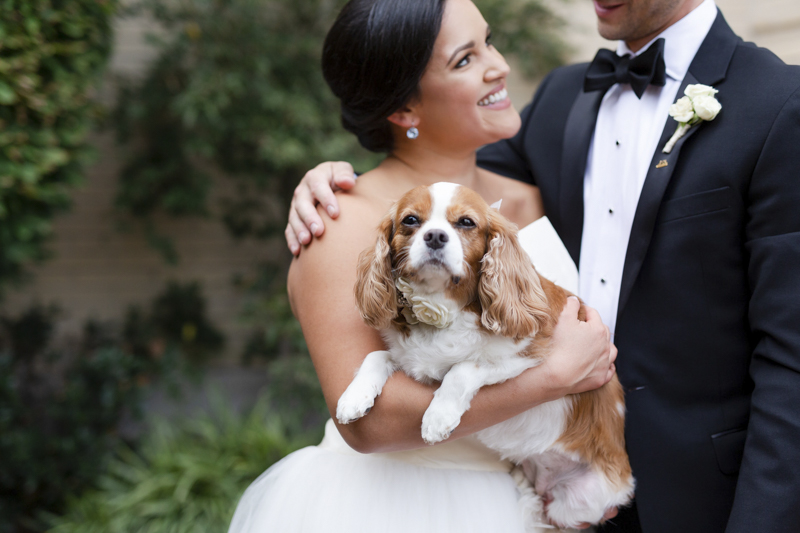 bride holding King Charles Cavalier Spaniel looing at groom, wedding dog, ©Luke & Ashley Photography | wedding dog, The Jefferson Hotel, Richmond, VA