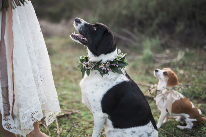 dogs wearing floral collars | ©My Sun And Stars, San Diego dreamy styled shoot