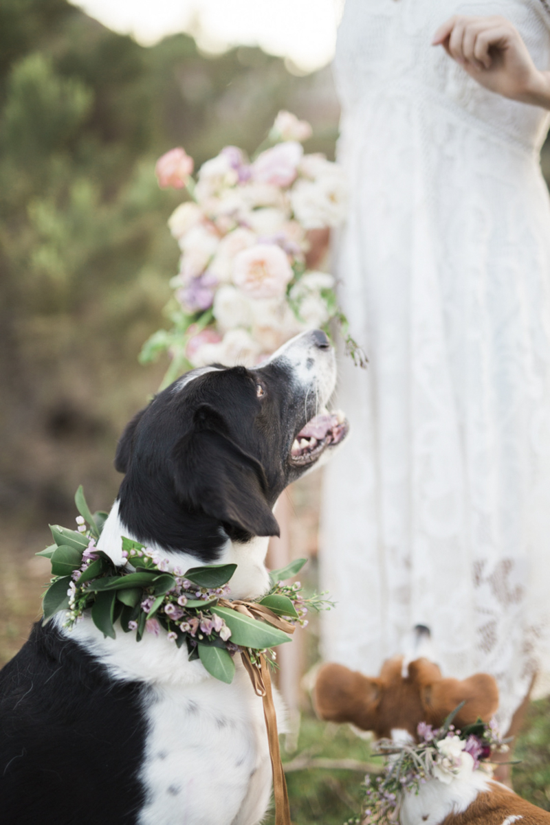 ©My Sun And Stars | San Diego dreamy styled shoot with dogs and flowers