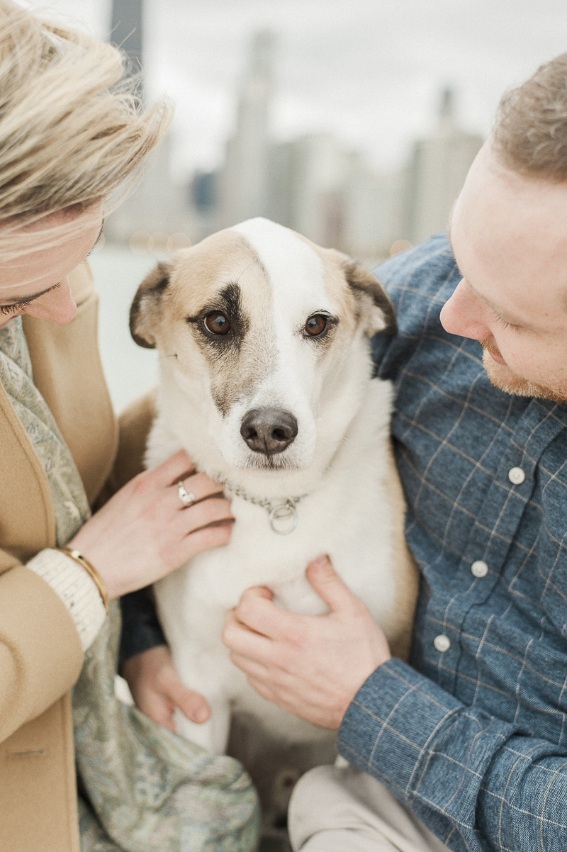 sweet brown and white mixed breed, engagement photos with a dog ©Nicole Jansma Photography