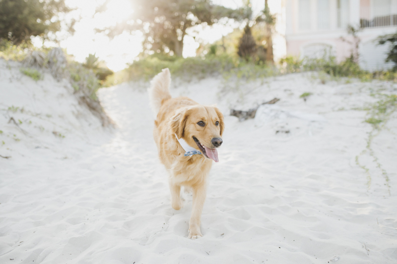 ©Rainey Gregg Photography | St. Simons Island, dog-friendly beach engagement session