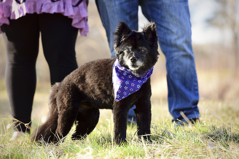little mixed breed dog, senior dog photography ideas, ©Wag Your Tail Photography | Denver pet photography