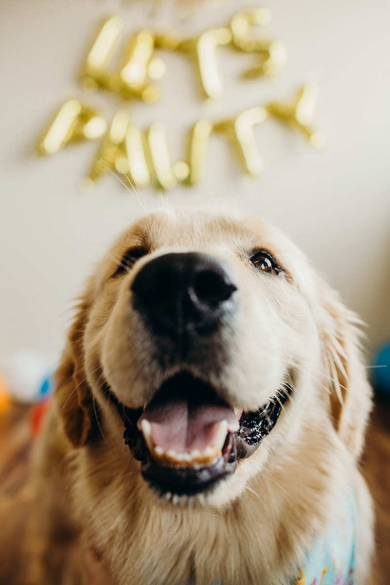 ©Alexa Nahas Photography | dog pawty, dog's first birthday celebration