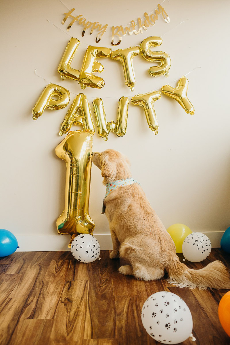 dog sniffing gold mylar balloon, ©Alexa Nahas Photography | dog cake smash