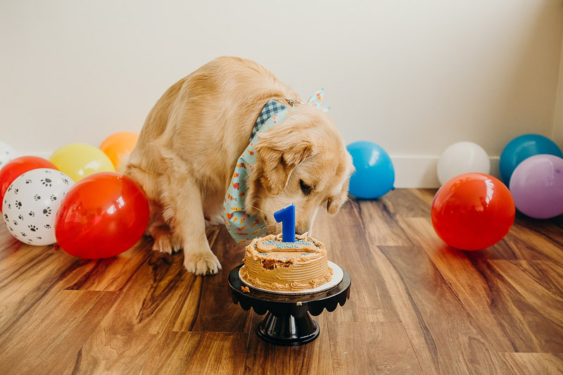 dog's first birthday cake, ©Alexa Nahas Photography