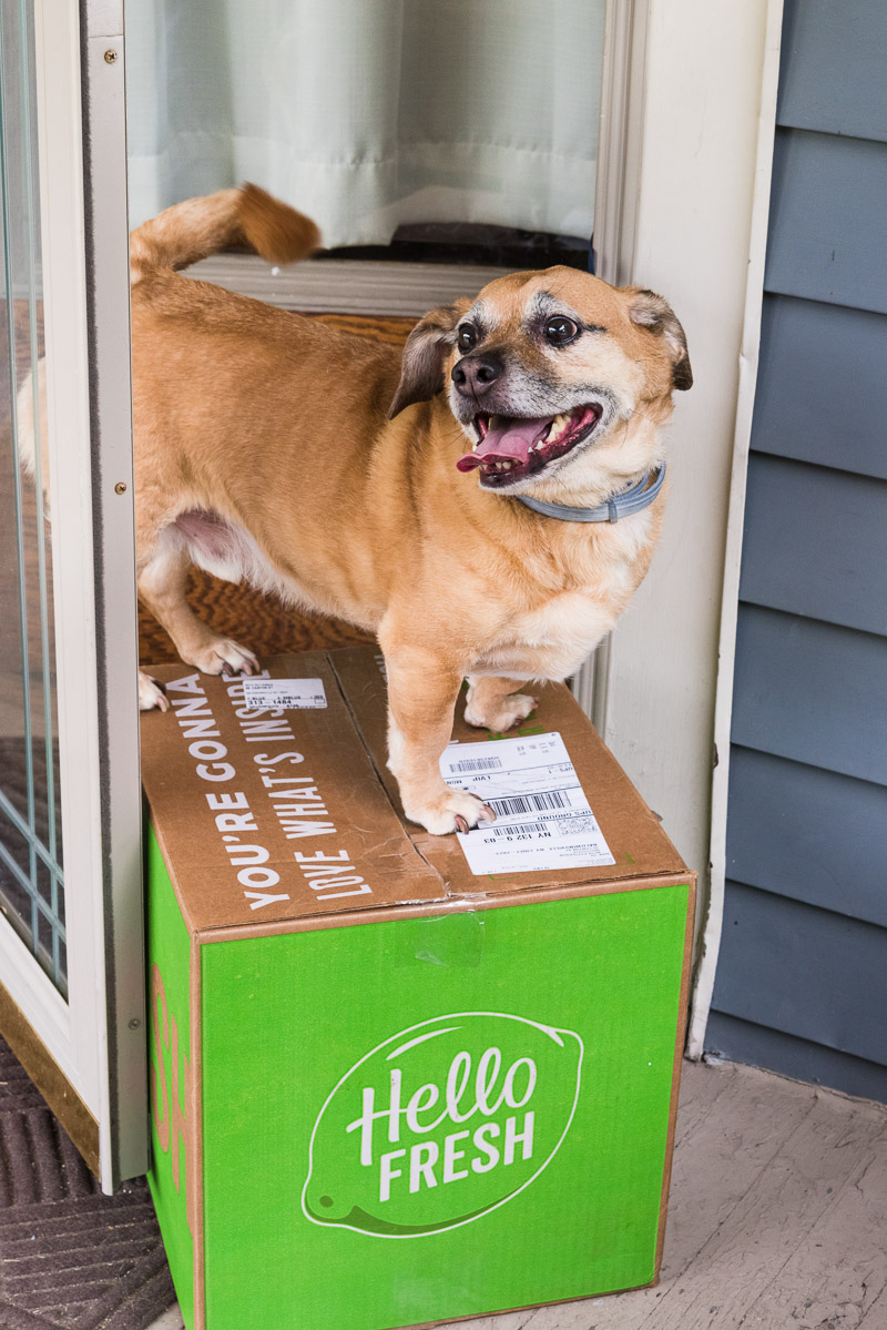Happy Dog on box of food, subscription meal planning, Hello Fresh, ©Alice G Patterson Photography
