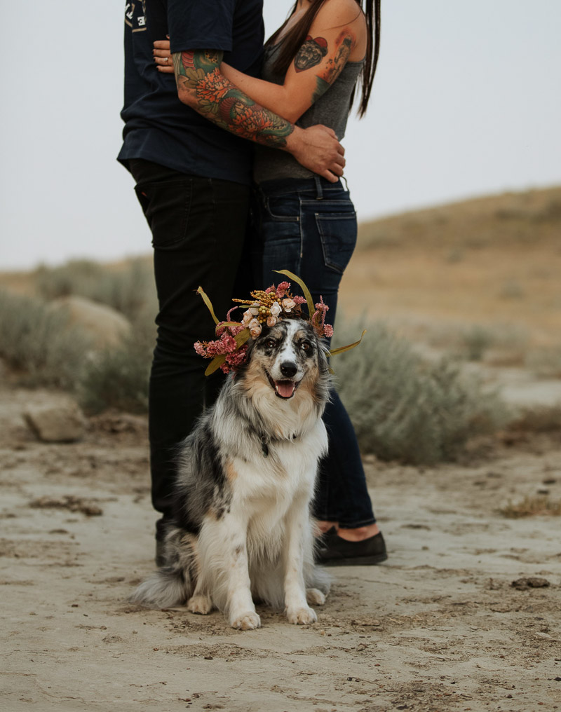 Australian Shepherd/Border Collie mix wearing floral crown sitting in front of embracing couple ©Jackie Hall Photography