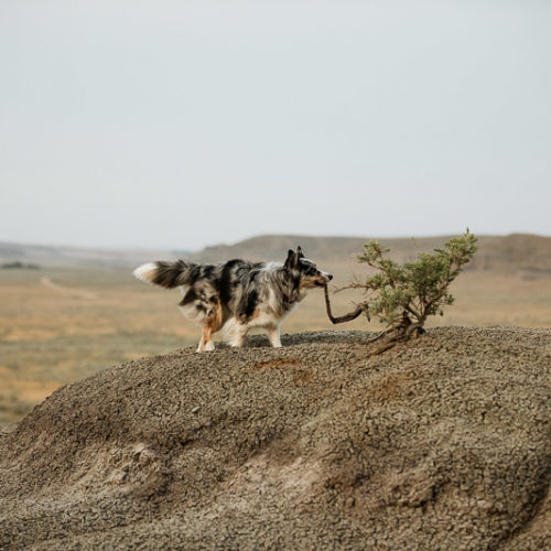 Dog-Friendly Engagement Photos In Big Muddy Valley