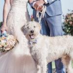 Best (Wedding)Dog:  Larry   Patriotic Styled Shoot