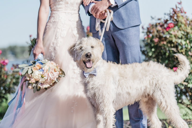 happy wedding dog wearing blue bow tie, dog-friendly wedding, ©Landrum Photography