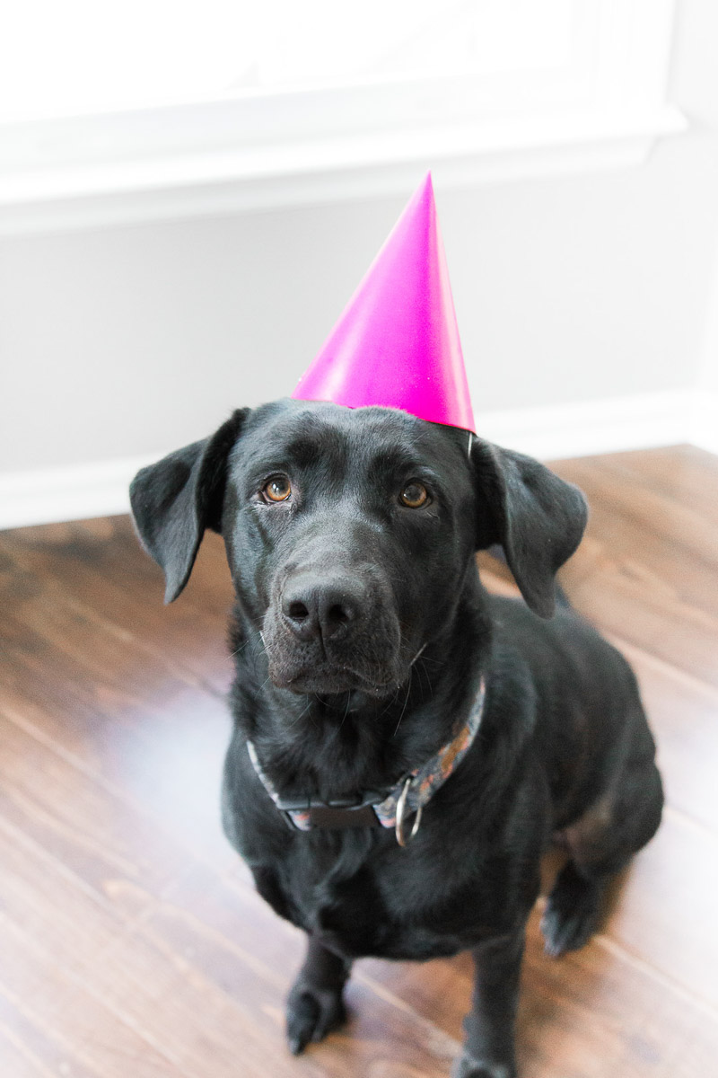 cute black lab wearing pink party hat, ©Kasie Tanner Photography | Lifestyle dog photography, Eatonton, GA