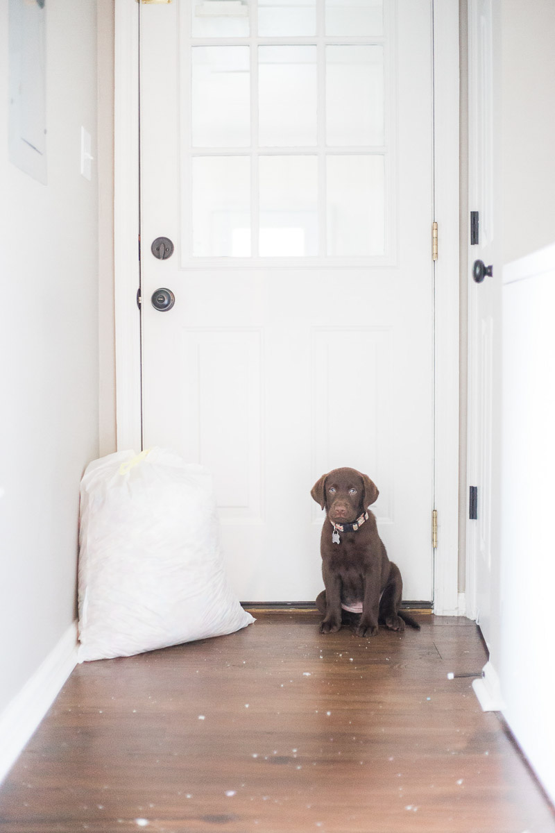 lab puppy and destroyed bed, ©Kasie Tanner Photography | Lifestyle dog photography, Eatonton, GA