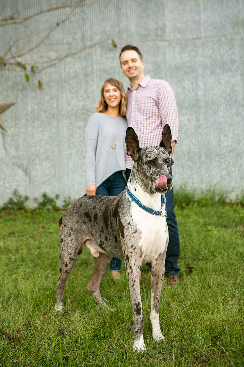lifestyle dog photography, Great Dane and his family, ©Mandy Whitley Pet Photography