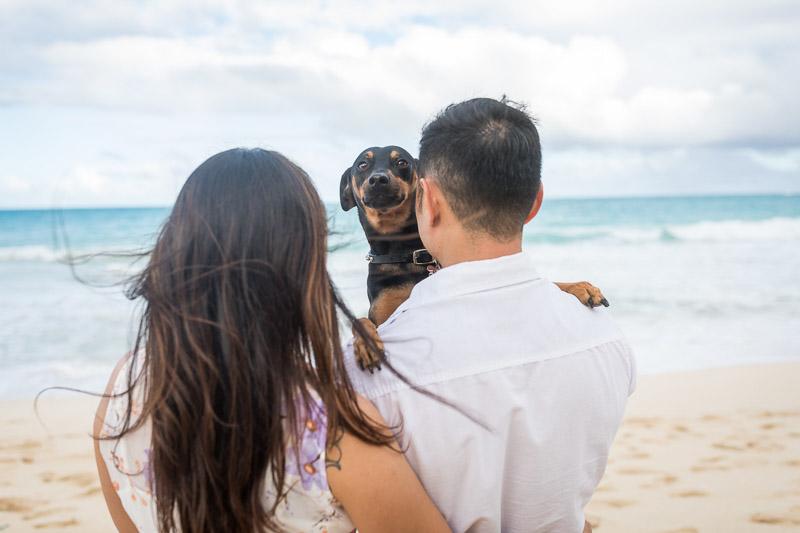 Min Pin mix looking over man's shoulder | ©VIVIDFotos | dog-friendly engagement photos, Waimanalo, Hawaii