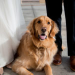 Best (Wedding) Dog:  Ollie the Golden Retriever