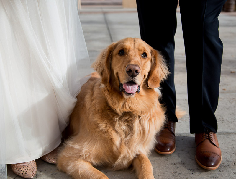Wedding dog, Golden Retriever between bride and groom | ©Melissa J Koko Film + Portraits