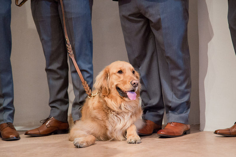 handsome Golden Retriever with groomsmen | ©Melissa J Koko Las Cruces, NM Photographer