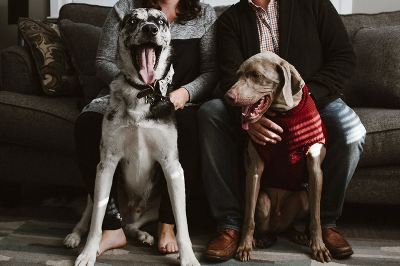 In home family photos with dogs, Mixed breed and Weimaraner and their humans | Sandy Anger Studios