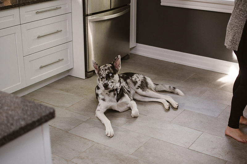 handsome mixed breed with blue eyes laying on kitchen floor | ©Sandy Anger Studios
