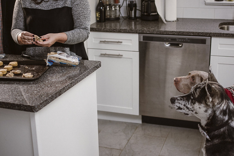 dogs watching humans make cookies | ©Sandy Anger Studios | family portraits with dogs Guelph, Ontario