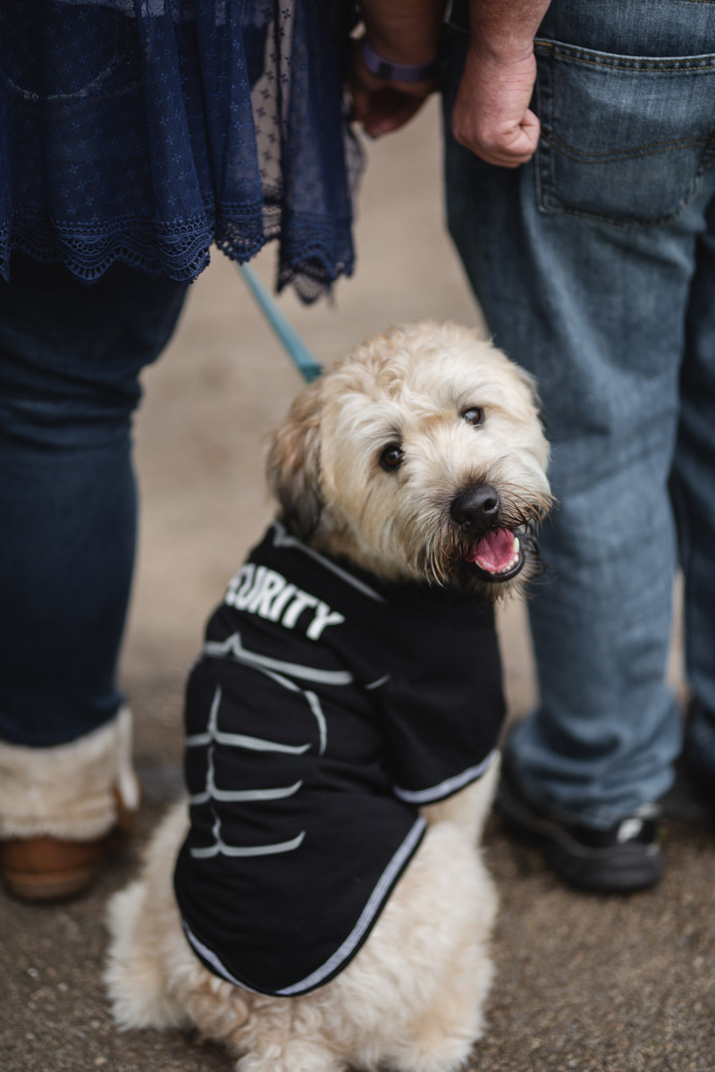 Dog-friendly engagement session, dog wearing Security t-shirt | ©Stephanie West Photography