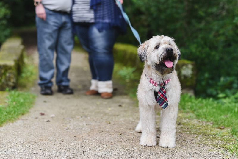Dog-friendly engagement session | ©Stephanie West Photography Dobby the Flying Wheaten