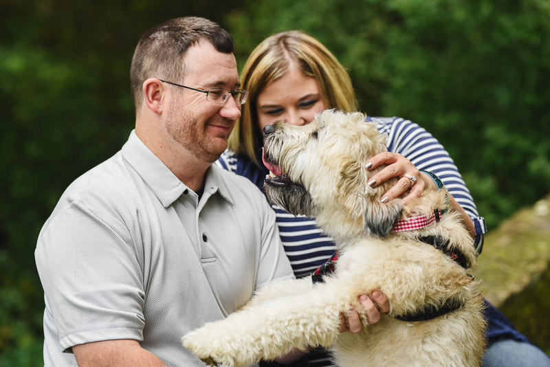 cute Wheaten Terrier looking at his humans, engagement photos with a dog ©Stephanie West Photography
