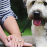 Engaging Tails:  Dobby the Flying Wheaten