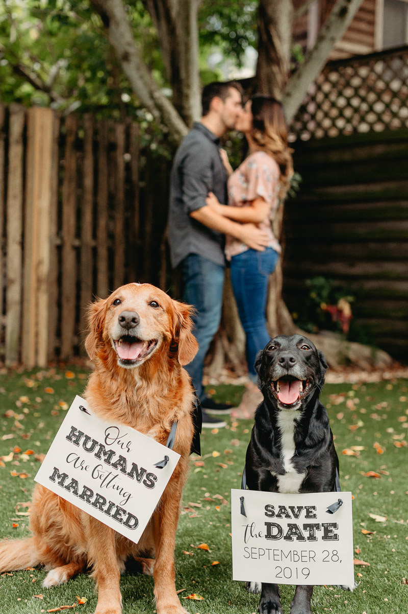 Engagement Photos with Adorable Dogs In Tampa, Florida, | Dewitt For Love Photography