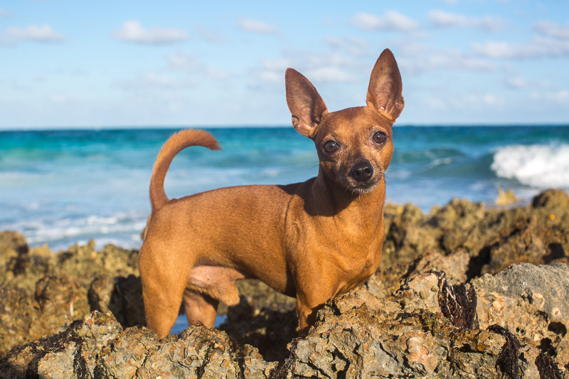 ©Paola Wells Photography | Harbour Island, Bahamas dog photographer