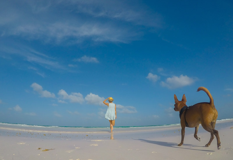 Paola Wells Photography - dog photography, Bahama lifestyle portraits, Min Pin on the beach