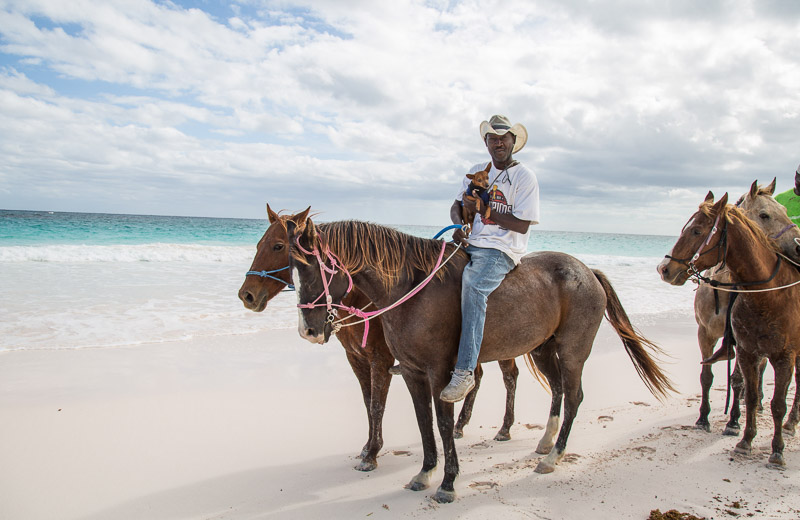 Bahamas horses and small dog, man holding MinPin while riding a horse ©Paola Wells Photography