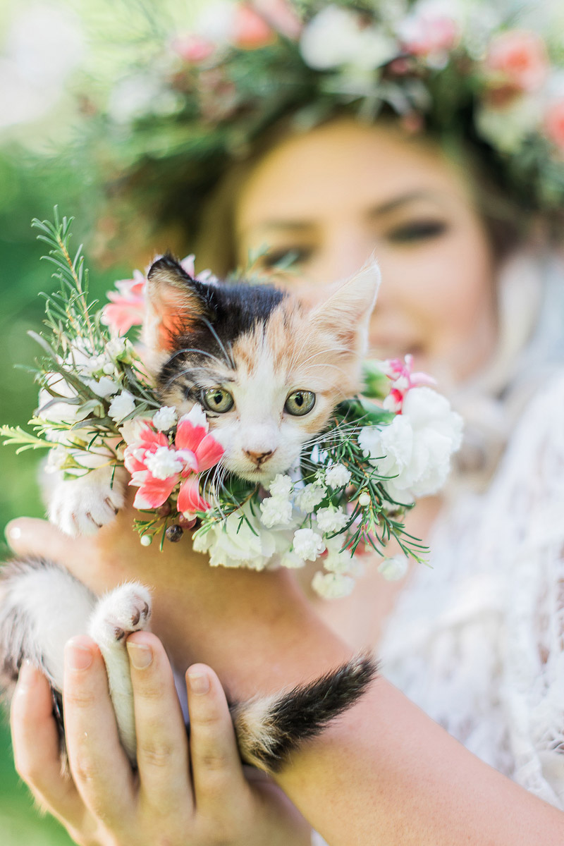adorable calico kitten wearing floral collar | © R and M Bledsoe Photography | pet friendly bridal portraits, Houston, Texas