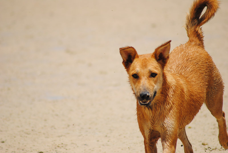 happy adoptable dog | Animal Welfare Dahab in Sinai, Egypt