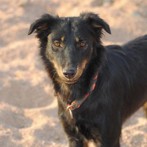 Adopt Me:  Animal Welfare Dahab in Sinai, Egypt