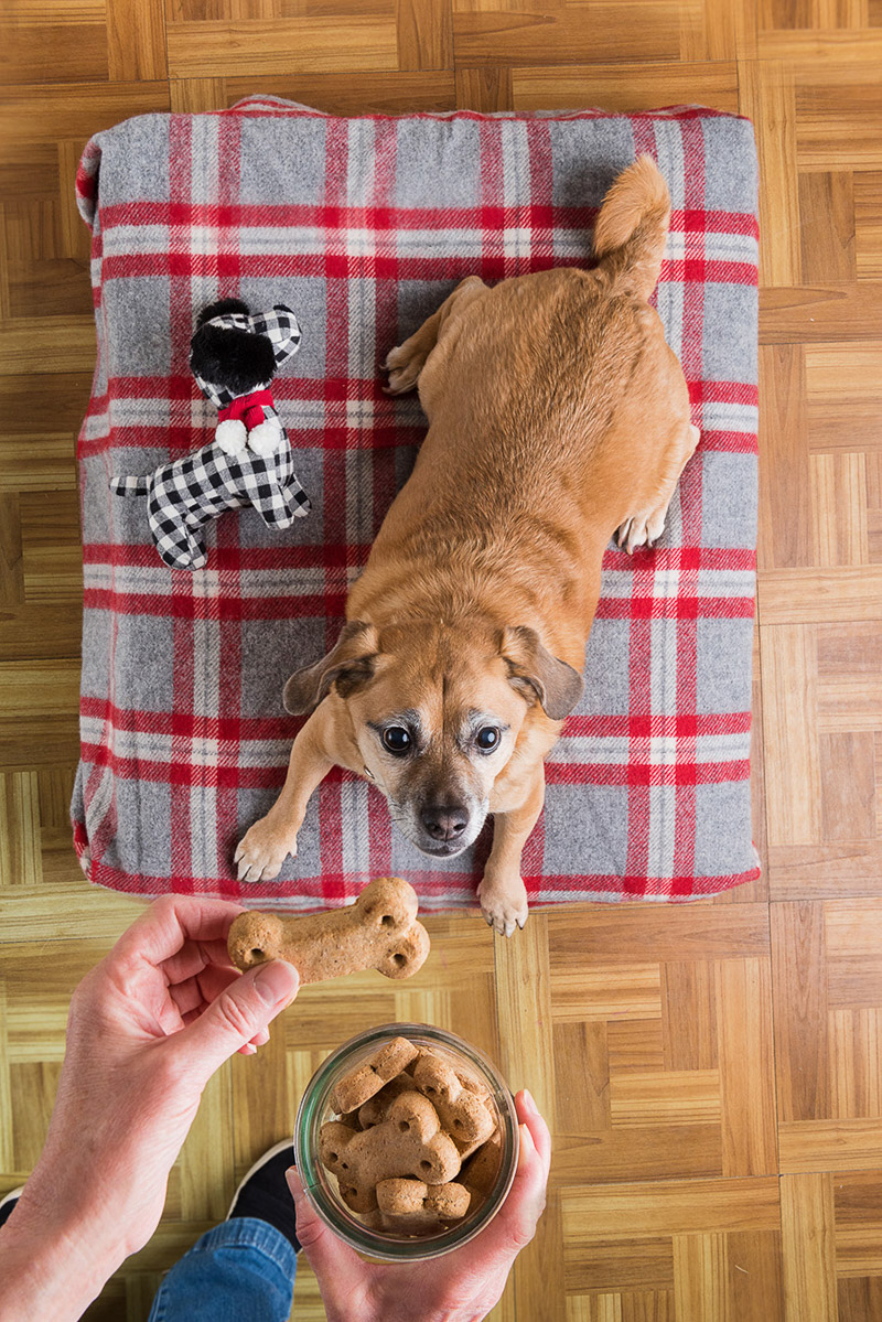 cute mixed breed waiting for snack, ©Alice G Patterson Photography | Syracuse dog photographer