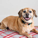 Artisan Inspired Dog Biscuits Will Make Your Dog's Day