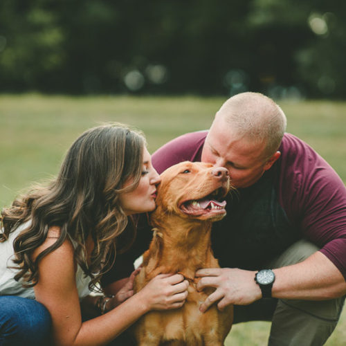 Engaging Tails: Mia the Red Labrador Retriever