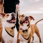 Dog-Friendly Engagement Session | Honeymoon Island