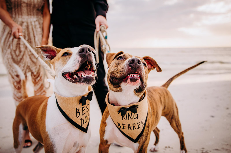 Dog-Friendly Beach Engagement Session | Honeymoon Island, handsome dogs on the beach, Landrum Photography