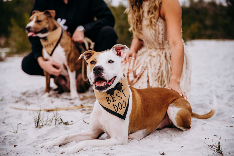 Dog-Friendly Engagement Session | Honeymoon Island