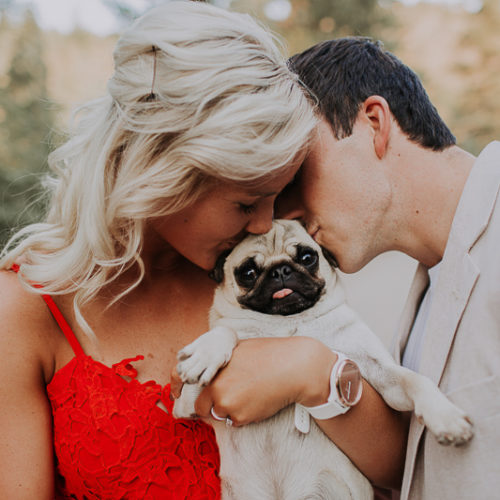 Engaging Tails:  Louie the Pug | Pocatello, Idaho