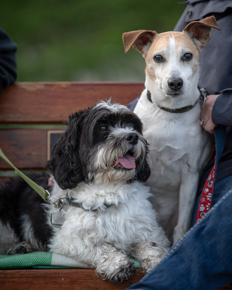 dogs sitting on bench, lifestyle pet photography ©Chase Magic Photography