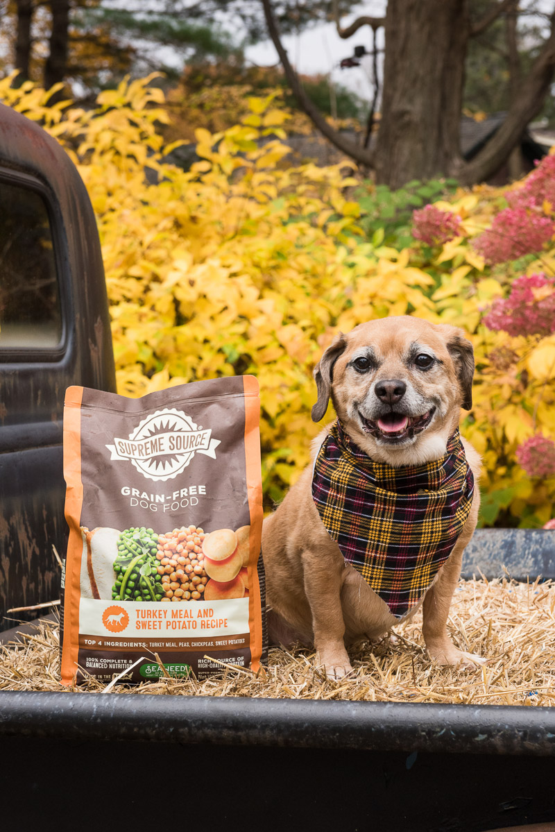senior dog and Supreme Source dog food in pack of old pickup | Alice G Patterson Photography, Central New York commercial photographer